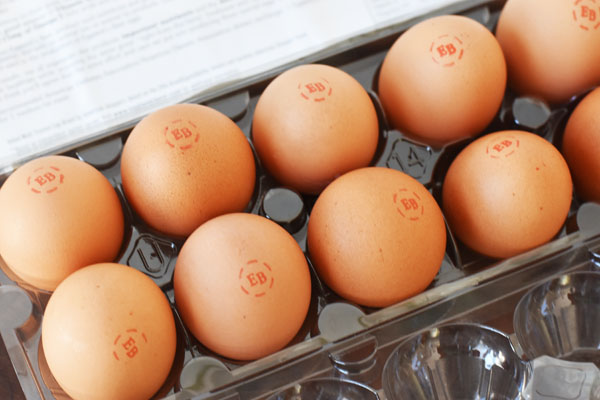 Egglands Best Cage Free Eggs