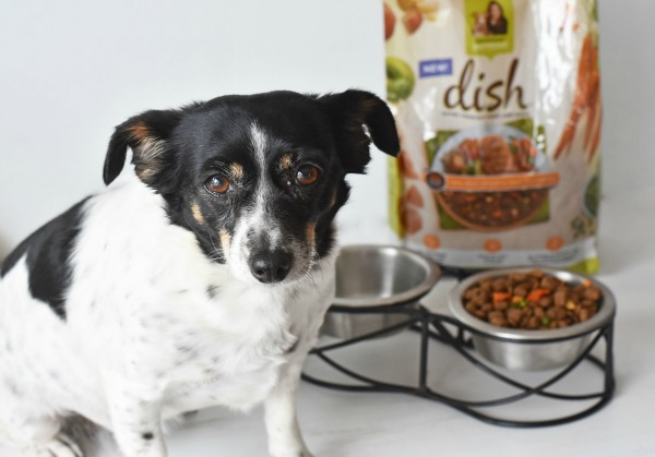 Chiweenie with Rachel Ray Dish Food1