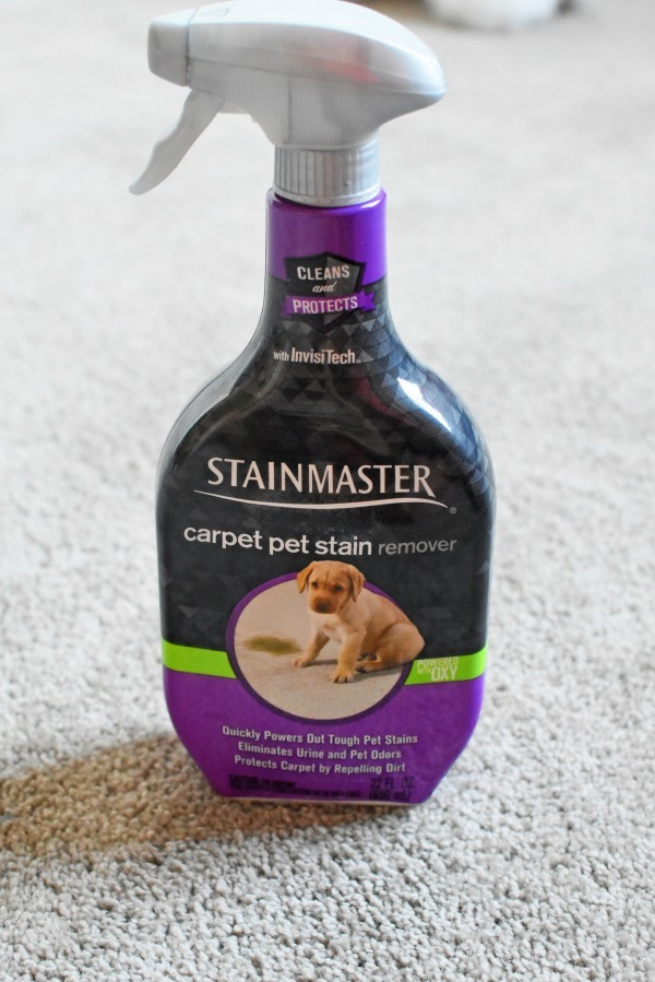 carpet pet stain remover